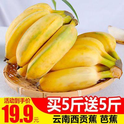 【买5斤送5斤】云南芭蕉西贡蕉小米蕉香蕉热带新鲜水果批发3斤