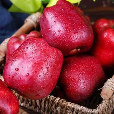 甘肃天水花牛苹果5斤粉面苹果新鲜应季水果宝宝孕妇辅食