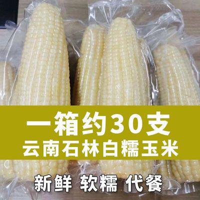 云南白糯玉米棒新鲜现摘粘黏非转基因真空包装苞米甜糯玉米即食