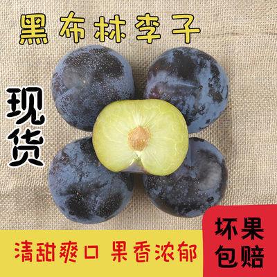 陕西新鲜黑布林李子黑巨李现摘新鲜孕妇水果黑布朗1/3/5/10斤包邮