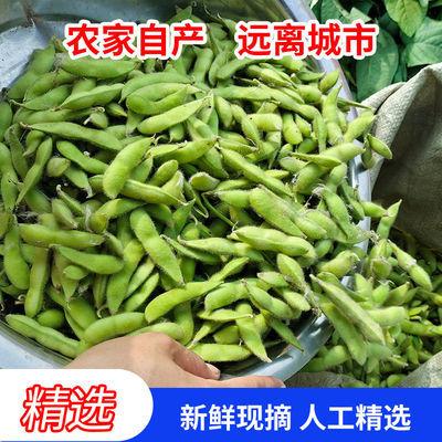 苏北新鲜毛豆嫩毛豆新鲜生毛豆青豆5 斤带壳农家自种毛豆盐水毛豆