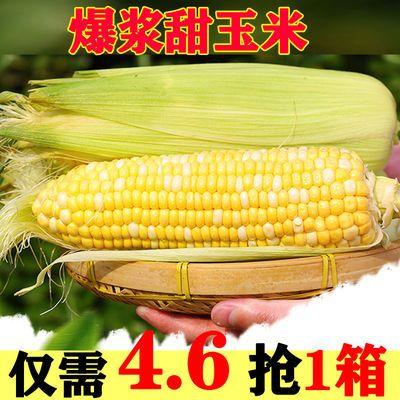 云南新鲜水果玉米生吃甜脆玉米棒爆浆甜脆玉米即食现摘甜苞谷批发