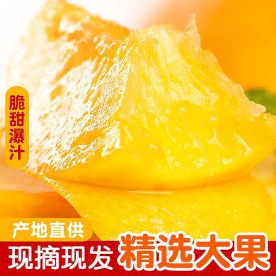 蒙阴现摘黄桃脆甜多汁毛桃孕妇新鲜水果水蜜桃黄毛桃整箱批发包邮