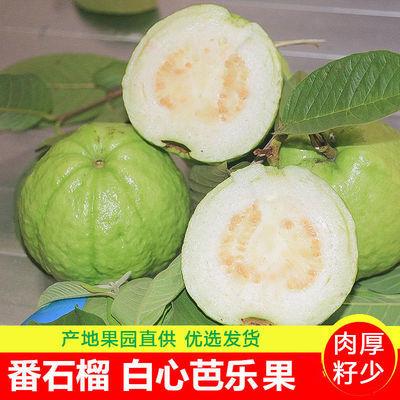 广东白心芭乐番石榴脆甜孕妇低糖水果2/5斤装新鲜少籽坏果包赔