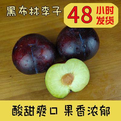 陕西西安新鲜黑布林李子孕妇水果当季现摘黑布朗酸甜黑巨李包邮