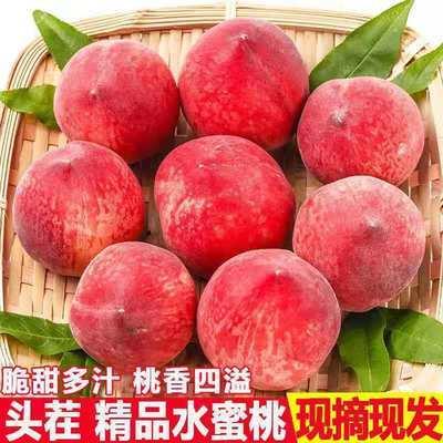 【坏果包赔】新鲜水蜜桃脆桃子毛桃水果现摘5/10斤新鲜新鲜桃子