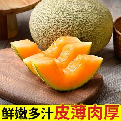 【超甜】哈密瓜当季新鲜水果脆甜小香瓜网纹西周蜜瓜整箱批发
