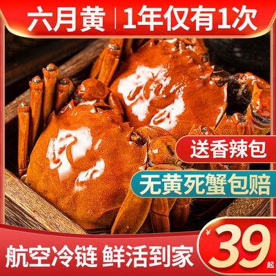 全母满黄大闸蟹鲜活特大螃蟹包邮公母蟹礼盒1-4两源产地冷链直发