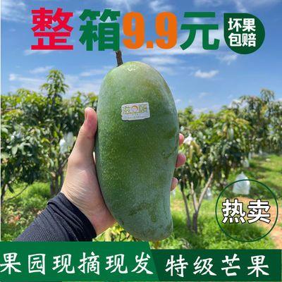 【坏果包赔】金煌芒果第一名新鲜大芒果批发10斤整箱吉禄芒贵妃芒