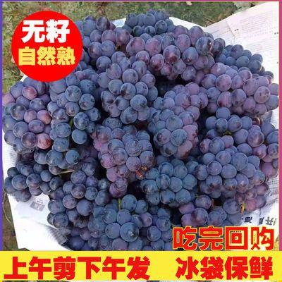 广西桂林现摘夏黑葡萄当季无籽新鲜批发提子黑加仑巨峰黑珍珠包邮