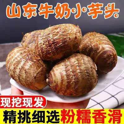 山东新鲜牛奶小芋头蔬菜小芋头毛芋头香芋农家自种芋头非荔浦芋头