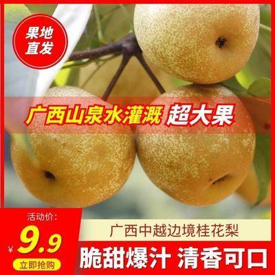 【皮薄超甜】梨鸭梨桂花梨梨子雪梨批发3/5/10斤黄花梨薄皮一整箱