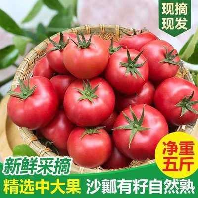 包邮西红柿生吃沙瓤自然熟番茄甘肃沙漠新鲜水果孕妇儿童绿色蔬菜