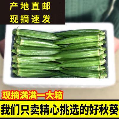 【当天采摘】自家秋葵新鲜现摘养胃蔬菜鲜嫩孕妇减脂水果精品秋葵