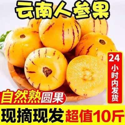 【现货】云南石林人参果新鲜圆果超甜多汁应季黄肉水果整箱批发