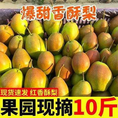 新疆库尔勒香梨红香酥小香梨酥梨新鲜梨子3/5/10斤应季脆甜水果