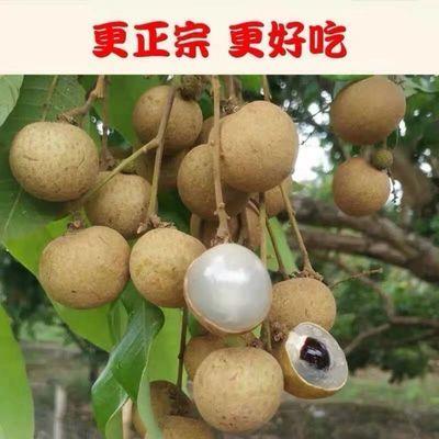 龙眼新鲜现摘大果储良整箱批发孕妇桂圆石硖应季海南热带当季水果