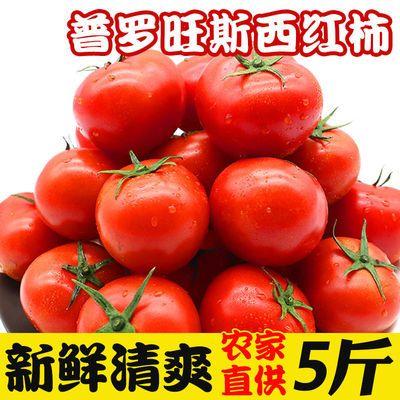 普罗旺斯西红柿新鲜红番茄自然熟3/5斤洋柿子应季孕妇水果蔬菜