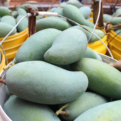 广西桂七芒小果带箱10斤水果新鲜当季包邮