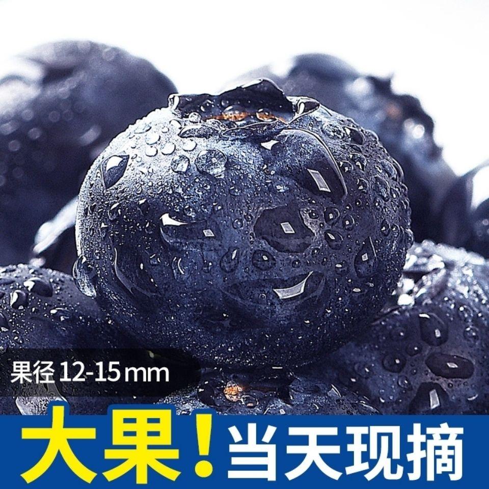 54145-【顺丰包邮】丹东山地现摘蓝莓鲜果大果新鲜水果蓝莓孕妇宝宝辅食-详情图