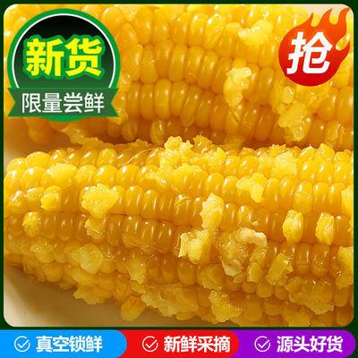 东北玉米糯玉米新鲜粘玉米棒真空即食非转基因黏苞米甜玉米8支装