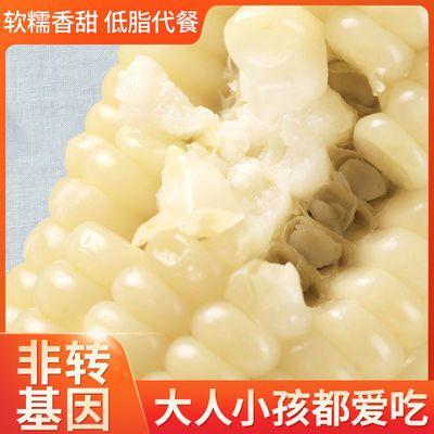 57673/白糯玉米棒东北新鲜真空包装甜糯白玉米批发低脂代餐非转基因玉米