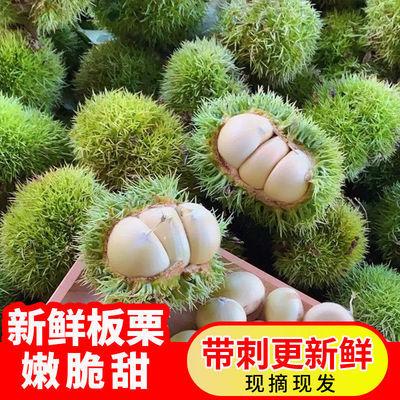 大凉山新鲜板栗现摘现发油栗嫩白脆甜运费水果带刺保鲜自然熟锥栗