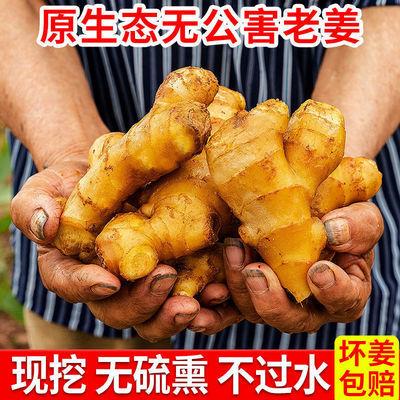 现挖生姜新鲜老母姜老姜黄姜当季蔬菜嫩姜小山东老大沙姜鲜姜本地
