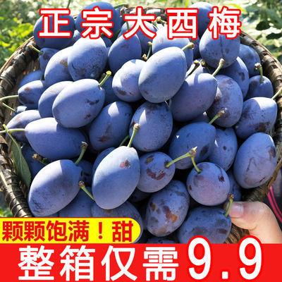 【宝宝辅食】汶川西梅新鲜水果国产李子法兰西1/5斤西梅水果皇后