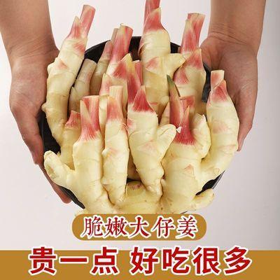 56377/山东嫩姜新鲜生姜仔姜子姜鲜姜腌制泡姜红芽姜黄姜大姜新姜老母姜