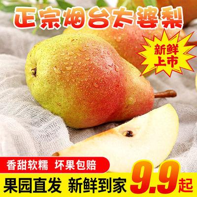 烟台太婆梨软糯啤梨茄梨香蕉梨软梨子2/3/5/10斤当季新鲜水果批发