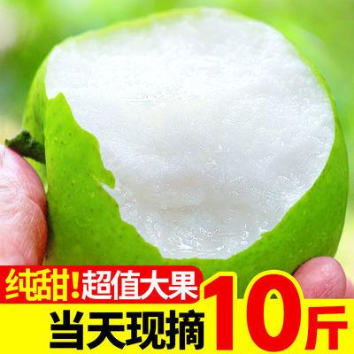 【2021新果上市】应季青皮皇冠梨新鲜水果10/1斤特大果礼盒装酥梨