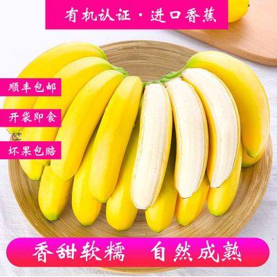 進口有機香蕉順豐包郵超甜蕉新鮮當季當季水果批發自然熟非芭蕉