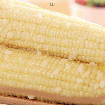 东北白黏糯玉米段10棒非转基因粗粮代餐真空包装加热即食黏糯玉米