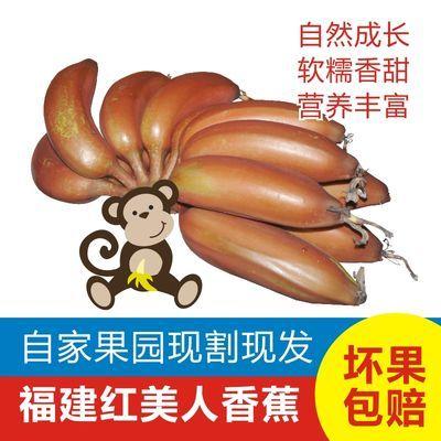 新鲜水果美人蕉红皮香蕉红美人蕉新鲜水果香蕉