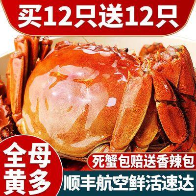 大闸蟹鲜活现货全母特大公母六月黄螃蟹3.5-1两阳澄湖镇发顺丰