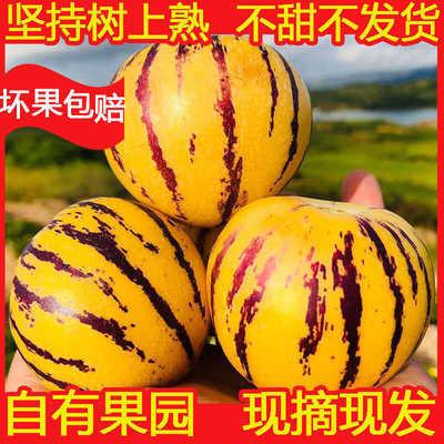 云南石林人参果七彩黄心3斤5斤特级大果新鲜水果人生果圆果整箱