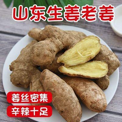 山东老姜母食用当季新鲜生姜老姜干姜小黄姜月子姜现挖蔬菜正宗