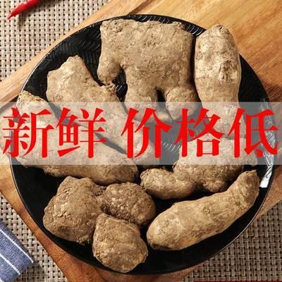 山东新鲜大姜黄姜生姜姜母月子姜精品带泥姜老姜姜母农家蔬菜批发