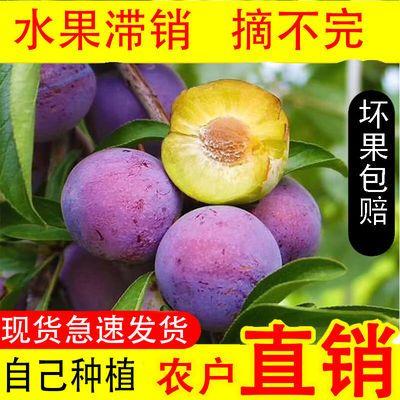 四川汉源正宗小红脆李脱骨李土李子5斤脆甜李孕妇水果农直销新鲜