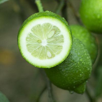现摘安岳青柠檬新鲜当季水果孕妇奶茶店非海南无籽黄柠檬香水柠檬