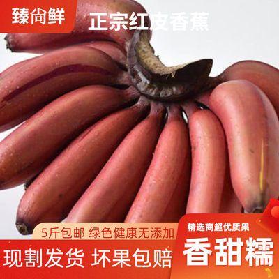 正宗福建红皮香蕉美人蕉新鲜水果应季现割发货5斤包邮批发