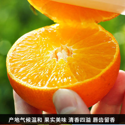 特早蜜橘孕妇橘子新鲜云南蜜橘青皮无籽现摘当季水果橙子10斤包邮