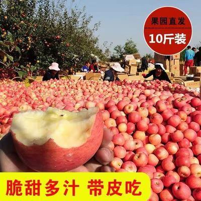 正宗红富士冰糖心脆甜丑苹果新鲜当季应季水果2/5/10斤批发
