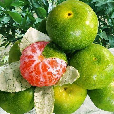 新鲜现摘青皮无籽应季水果蜜桔3斤5斤9斤包邮到家