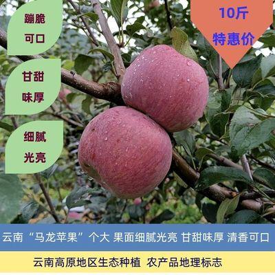 苹果水果新鲜当季水果丑苹果整箱现摘 现季云南嘎啦青红富士平果