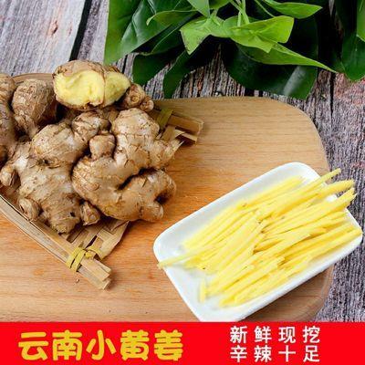 云南小黄姜生姜新鲜现挖新鲜老姜正宗月子食用姜1斤2斤3斤5斤批发