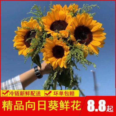 鮮花云南直發批發向日葵鮮花花束新鮮太陽花家用送人水養插花真花