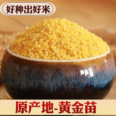 57565/黄小米新米早餐粥养胃米批发赤峰大金苗2斤粗粮绿色主食月子米
