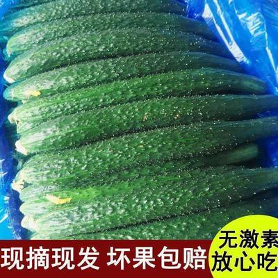 现摘河北农家蔬菜带刺水果黄瓜新鲜生吃清脆可口绿青瓜5斤3斤包邮
